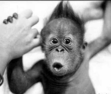 monos-graciosos-bebe