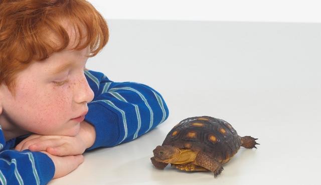tortugas-y-niños