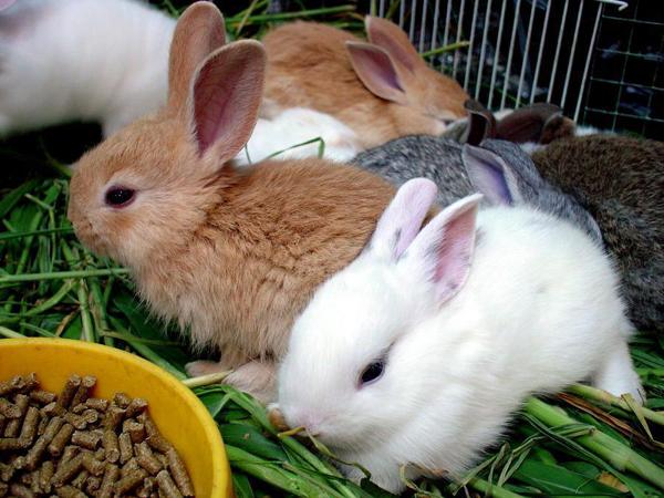ConejosComiendo
