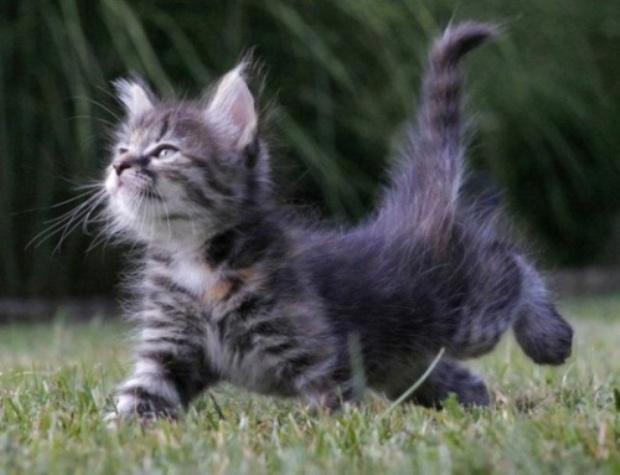 El-lenguaje-corporal-de-los-gatos-Feliway