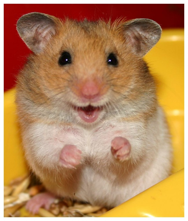 hamstersmile