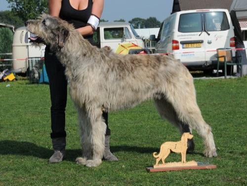 perrojonge-honden-klasse-reuen-pitlochrys-sting_500