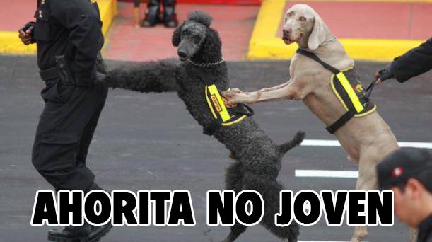 zzzzzzzzzzzzzpolicia-canina