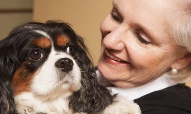 Qué-perro-adoptar-para-una-persona-mayor-1