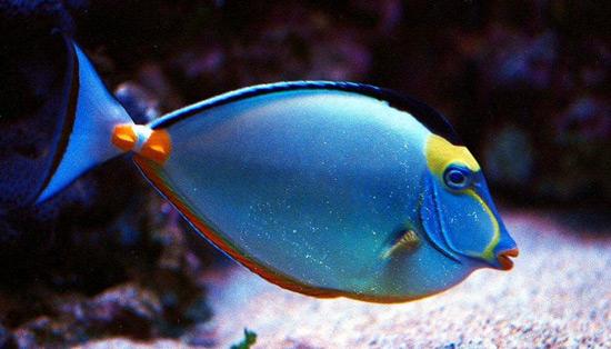 peces-sistema-nervioso-anipedia