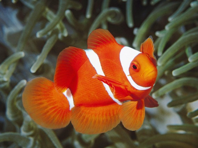 peces-tropicales-1