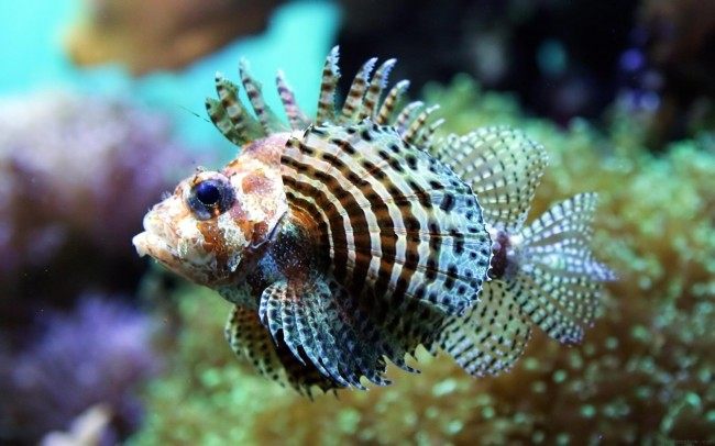 peces-tropicales-2
