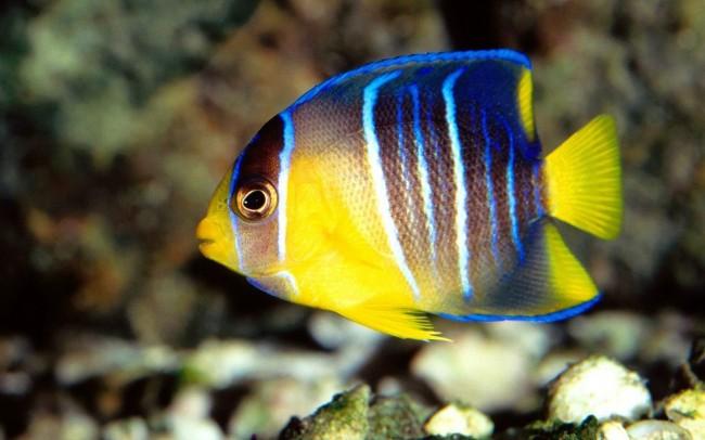 peces-tropicales