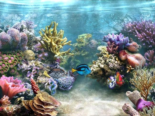 pecesacuario