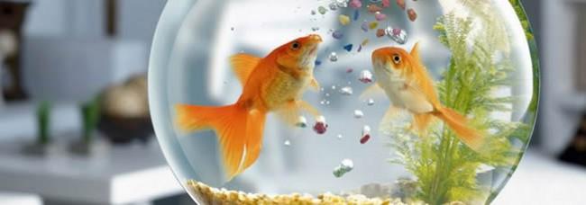pecesué-tipo-de-alimento-debo-darle-a-mis-peces
