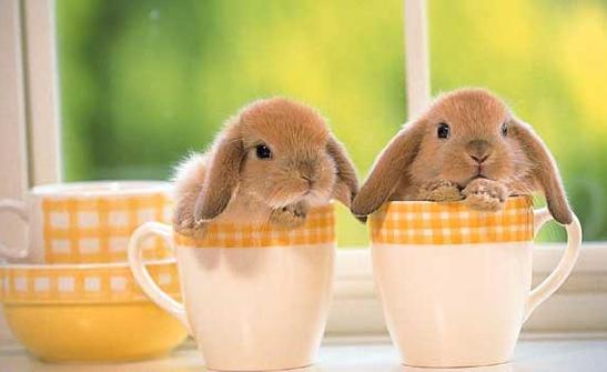 Conejosaptura de pantalla 2011-05-12 a las 15.02.57