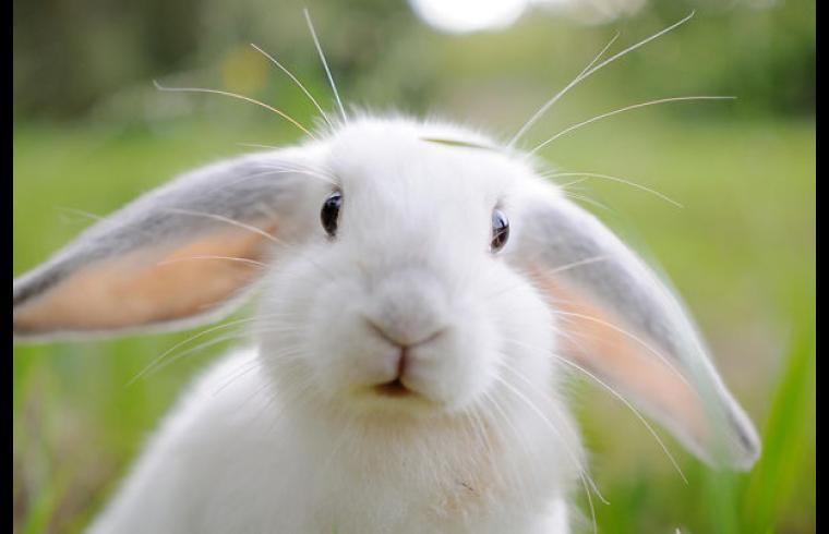 conejoute-bunnies-12_605