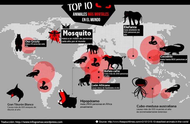 mortop-10-deadliest-animals-in-the-world_52ba865607db31