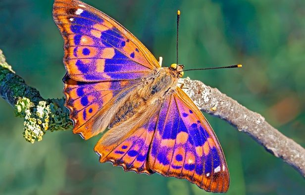 30 mariposas coloridas: Imágenes para compartir por