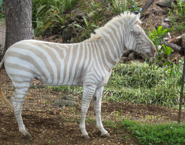 animales albinos - photo #34