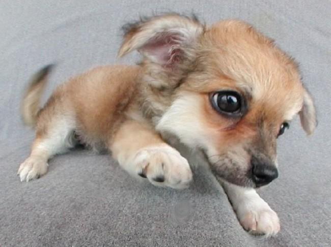 perro-sin-raza