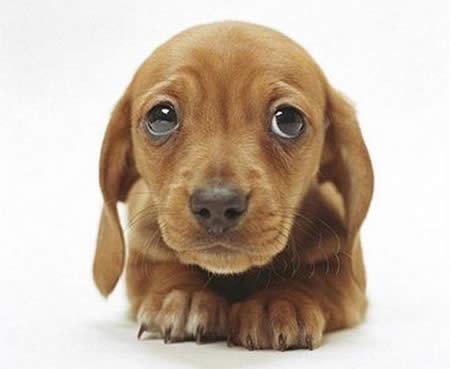 cachorros-tiernos14