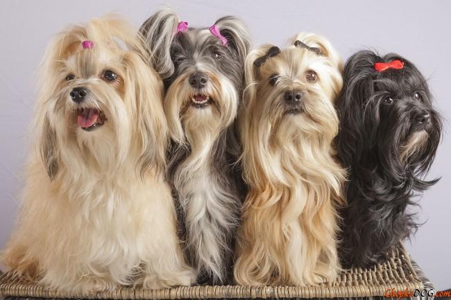 31-hermosas-fotografias-de-perros-de-raza