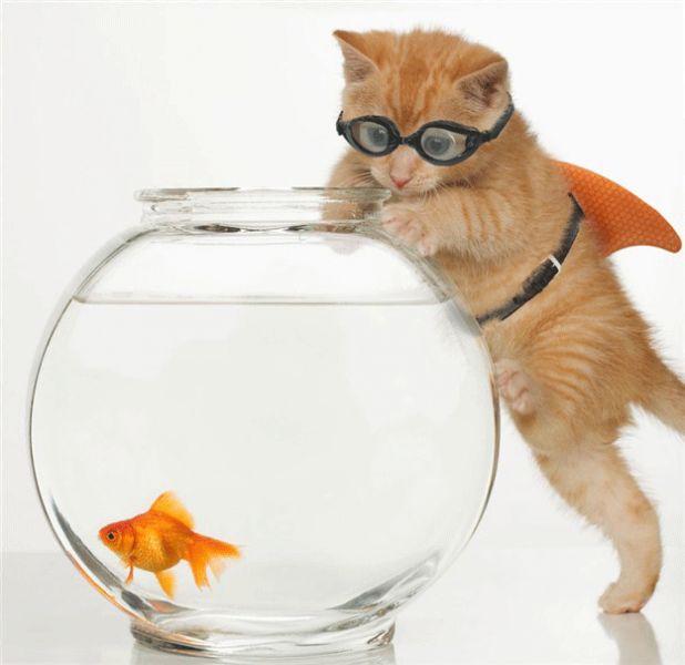 Imagenes de gatos y perros tiernos y graciosos  Animales Hoy
