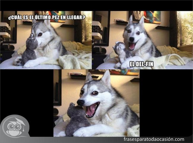 Cat Husky Meme