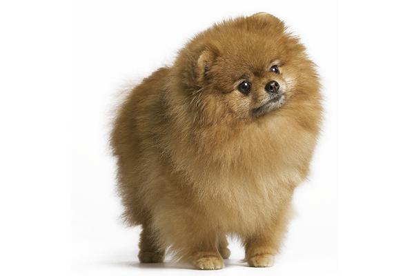 Perros-para-pisos-pequeños