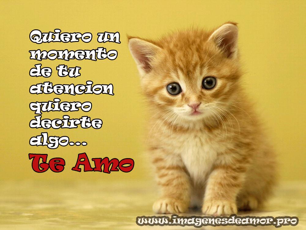 Imagenes De Amor Para Descargar Gratis: Gatitos Lindos Con Frases Bonitas De Amor Para Descargar