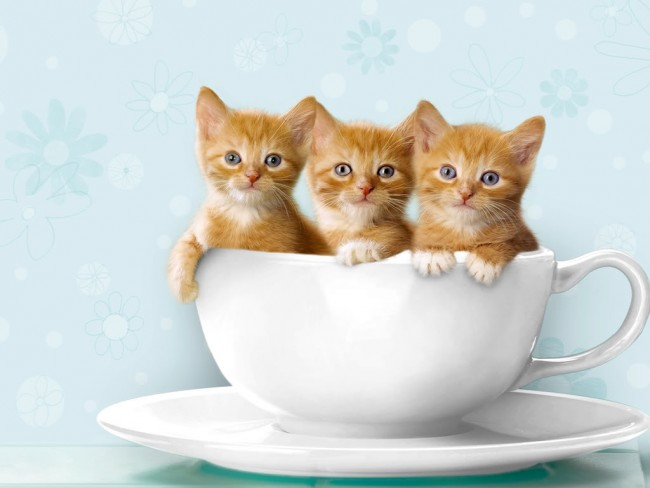 gatos,tiernos,fotos,graciosos