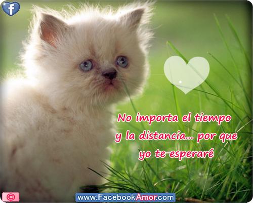 Gatitos lindos con frases bonitas de Amor para descargar