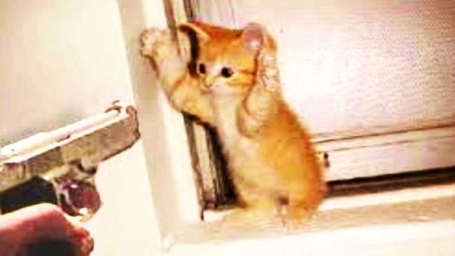 Imagenes de gatos y perros tiernos y graciosos | Animales Hoy