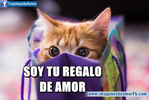 Imagenes Con Frases Bonitas De Amor Gratis: Gatitos Lindos Con Frases Bonitas De Amor Para Descargar