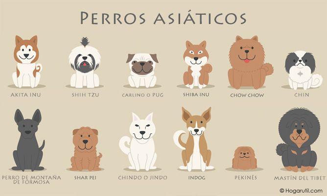 los-perros-asiaticos-xxxx80