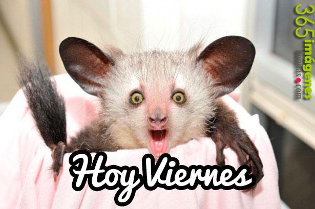 imagenes de animales graciosos con frases lindas de Feliz