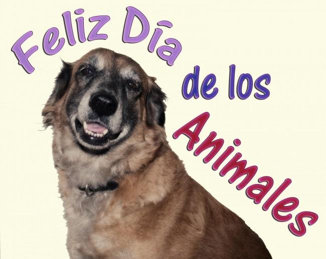 feliz-dia-del-animal-2014-feliz-dia-de-los-animales