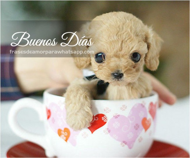 The Benefits of Green Tea for Dogs | Cuteness