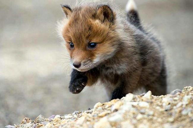 Fotografías de bebés animales