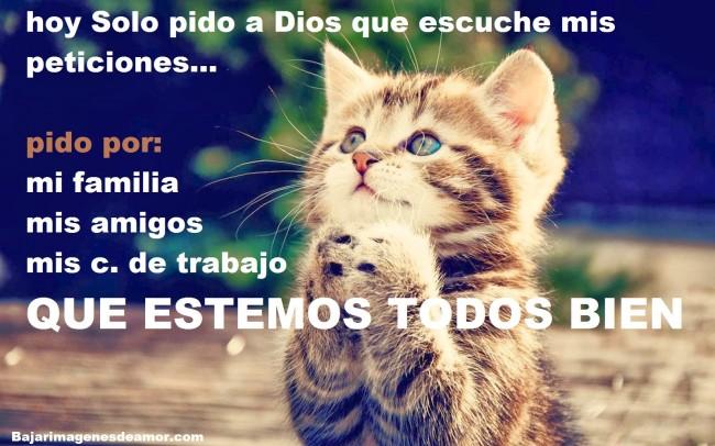 Imagenes De Gatos Con Frases De Amistad