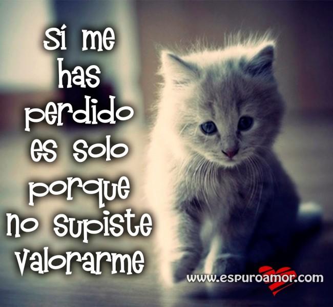 gatito,triste,si,me,has,perdido,es,solo,