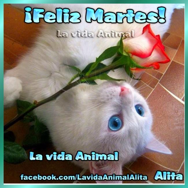 Lindos gatitos con frases lindas de Buenos dias en