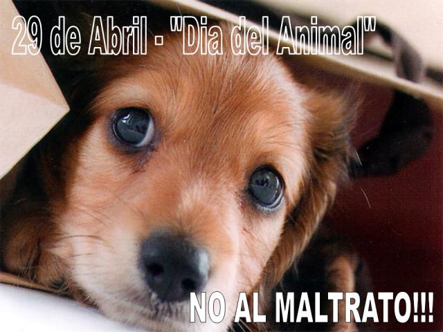 zzzzzzzwwwwwdia-del-animalNO_AL_MALTRATO