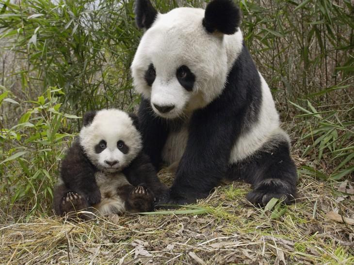 9-hermosas-fotos-de-animales-con-sus-crias_9