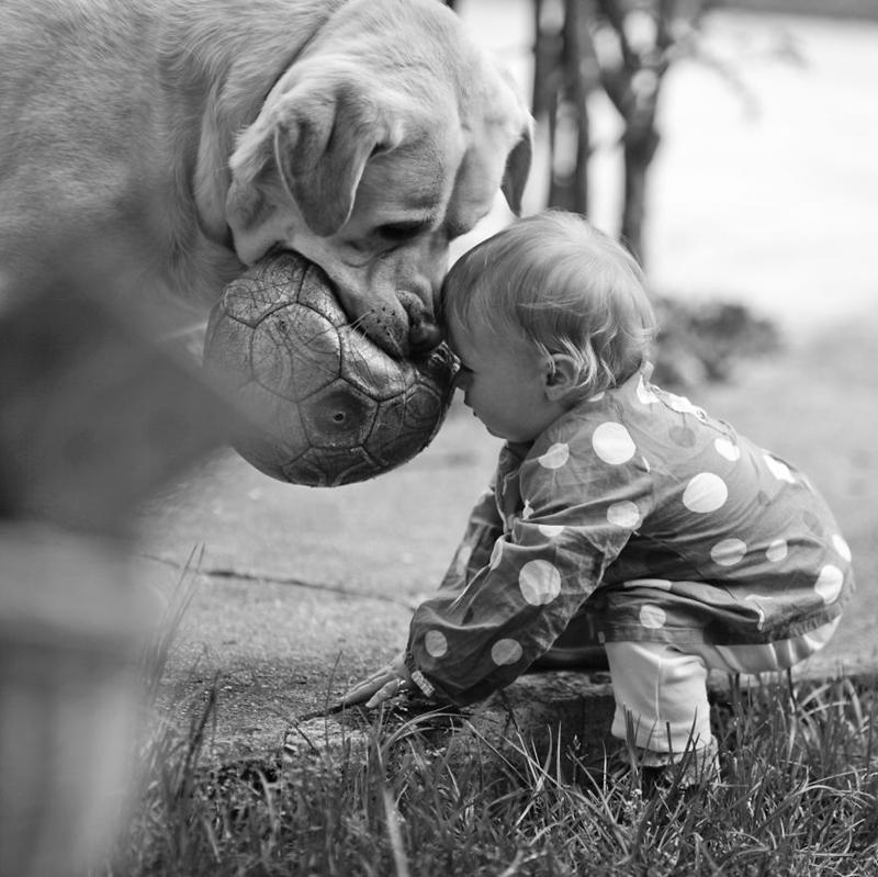 Big-dog-and-baby´s-1