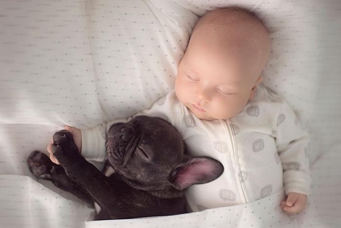 Perros-cuidando-de-bebes-3