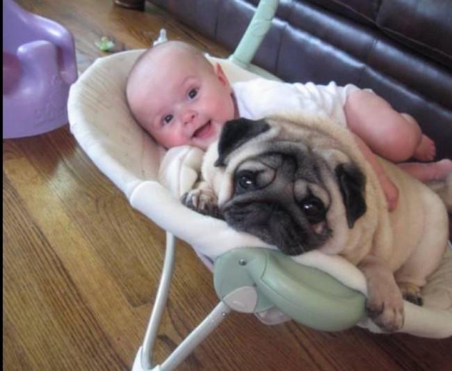 bebe-y-perro-1