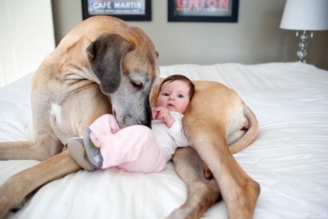 bebes_perros_gigantes-4