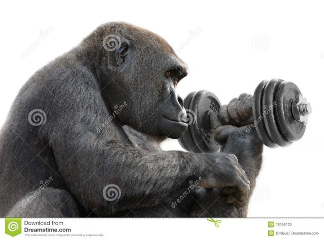 gorila-que-se-resuelve-con-una-pesa-de-gimnasia-18169130
