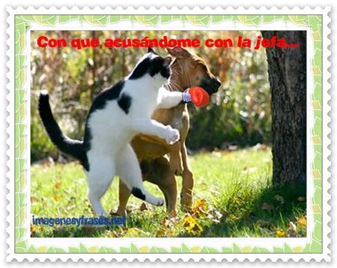 Imgenes de perros y gatos graciosas para el WhatsApp  Animales Hoy