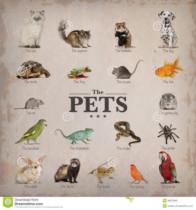 cartel-de-animales-domésticos-en-inglés-39622899
