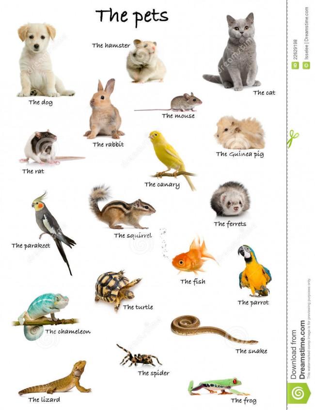 collage-de-animales-domsticos-y-de-animales-en-ingls-22629198