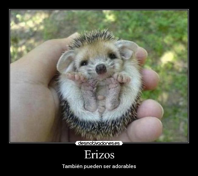 erizo_2