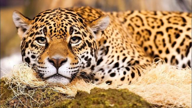 los-animales-mas-peligrosos-de-la-selva